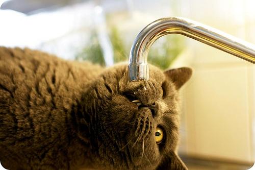 water faucet cat